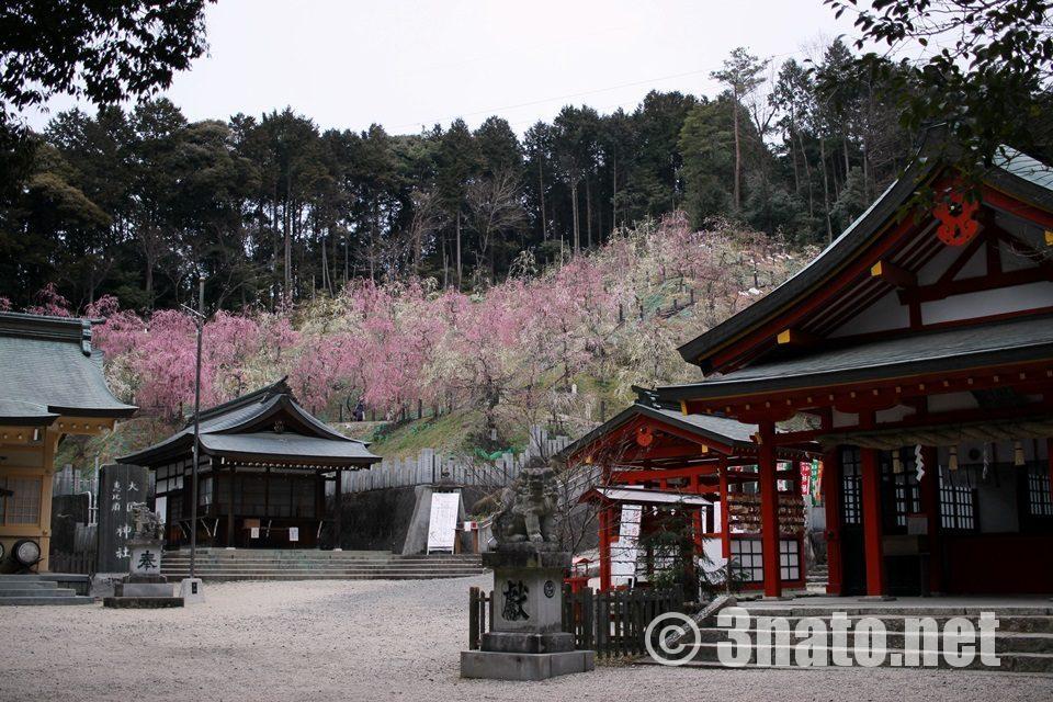 大縣神社の梅園