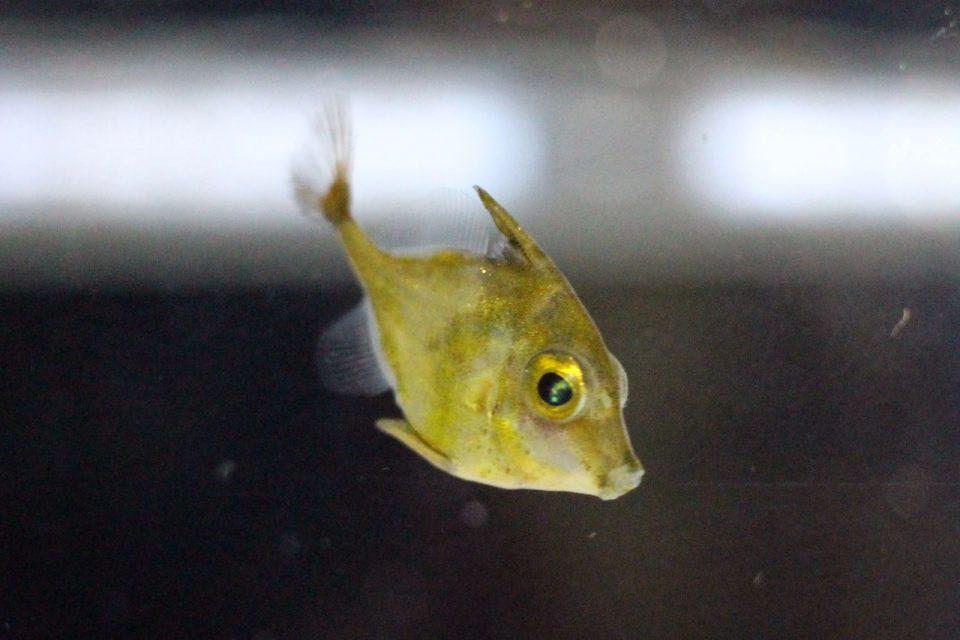 名古屋港水族館 ギマの赤ちゃん