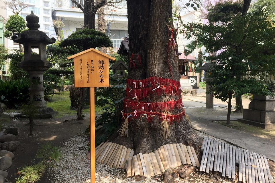 三輪神社 御神木の楠