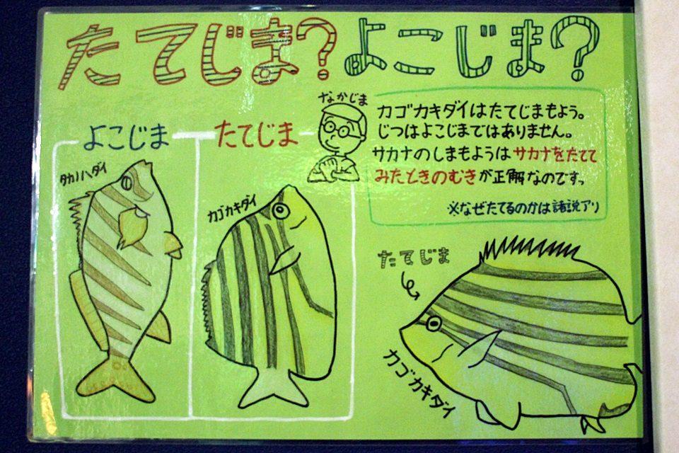 縞模様判定の解説(竹島水族館)