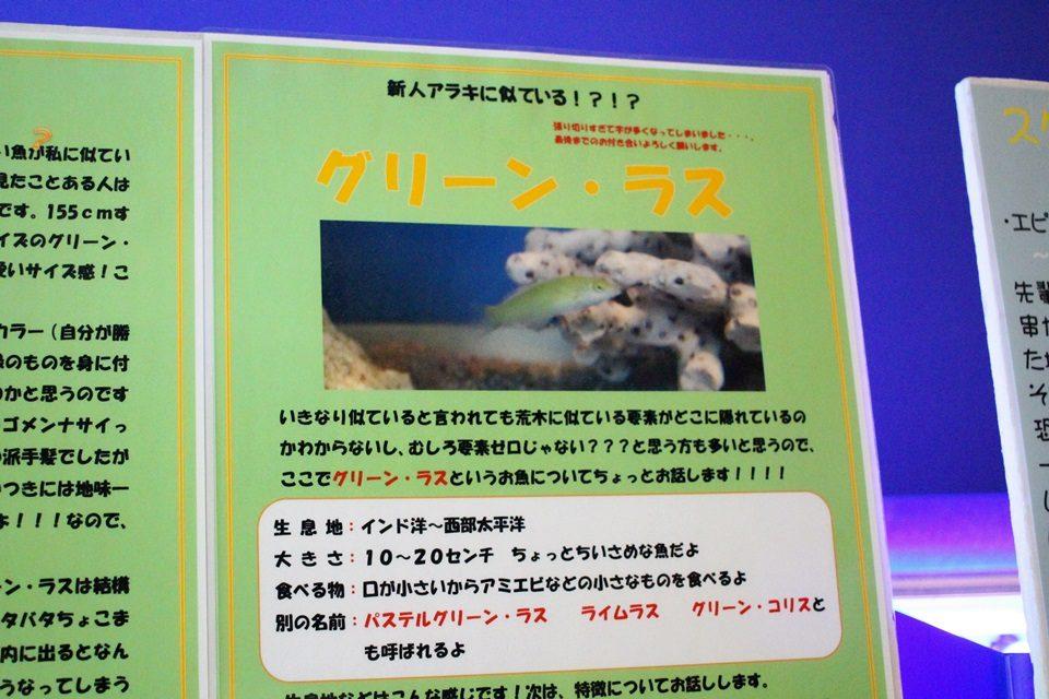 竹島水族館のグリーンラス解説