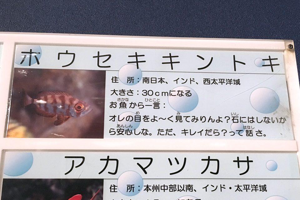 竹島水族館のホウセキキントキ解説