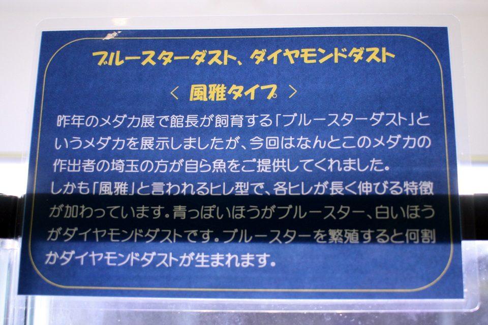 ダイヤモンドダスト(竹島水族館 企画展)