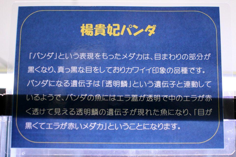 楊貴妃パンダ(竹島水族館 企画展)