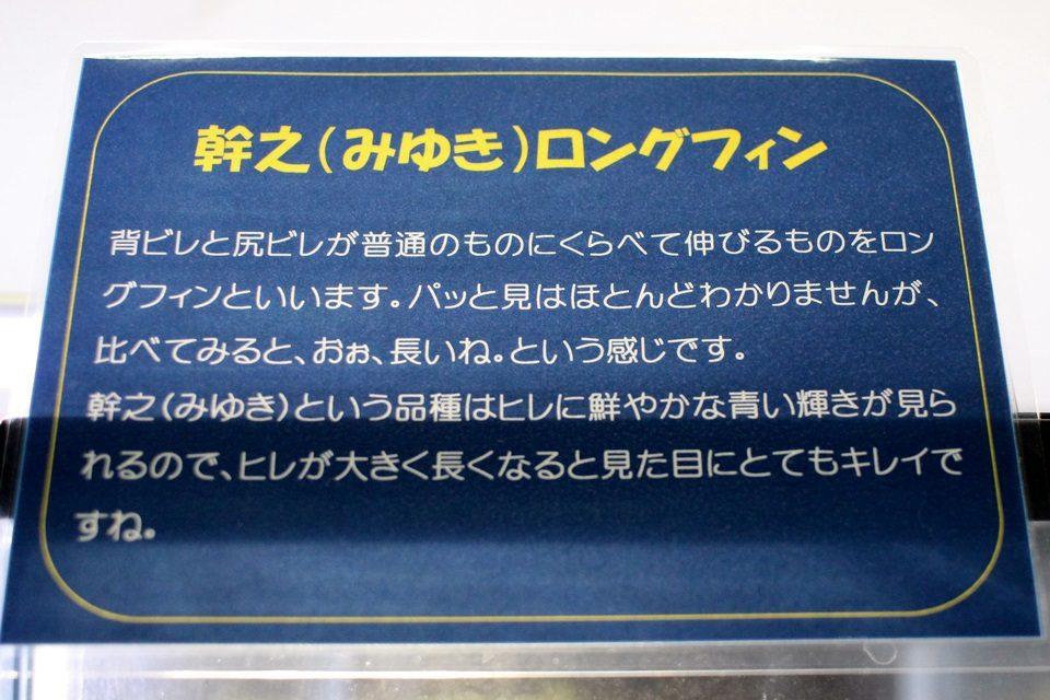 幹之ロングフィン(竹島水族館 企画展)