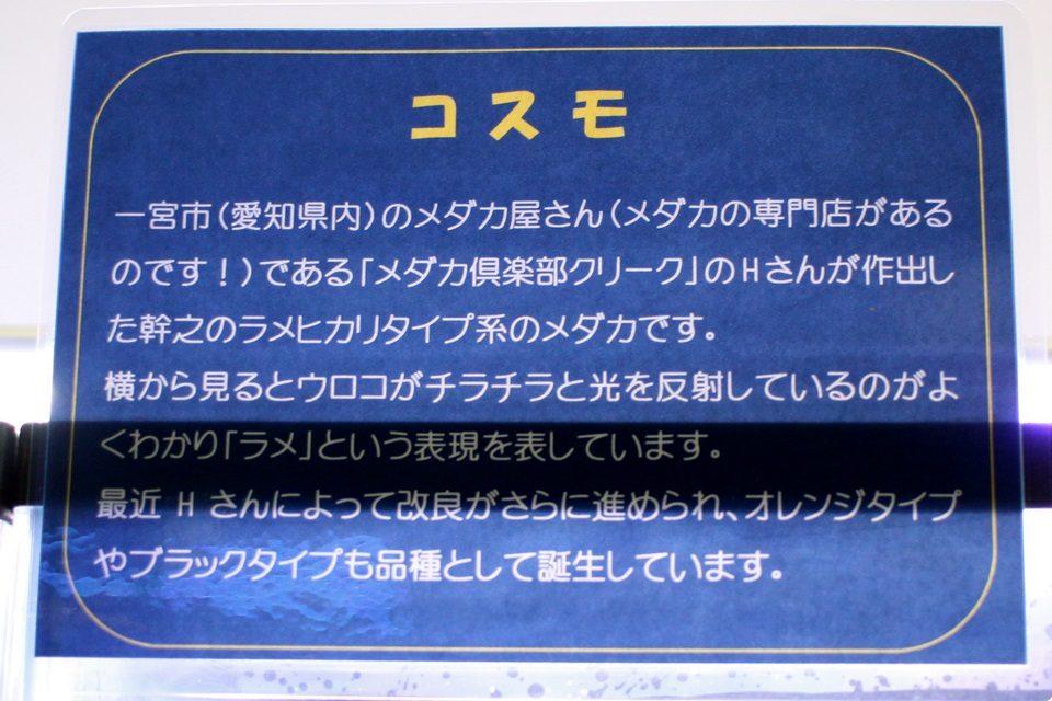 コスモ(竹島水族館 企画展)