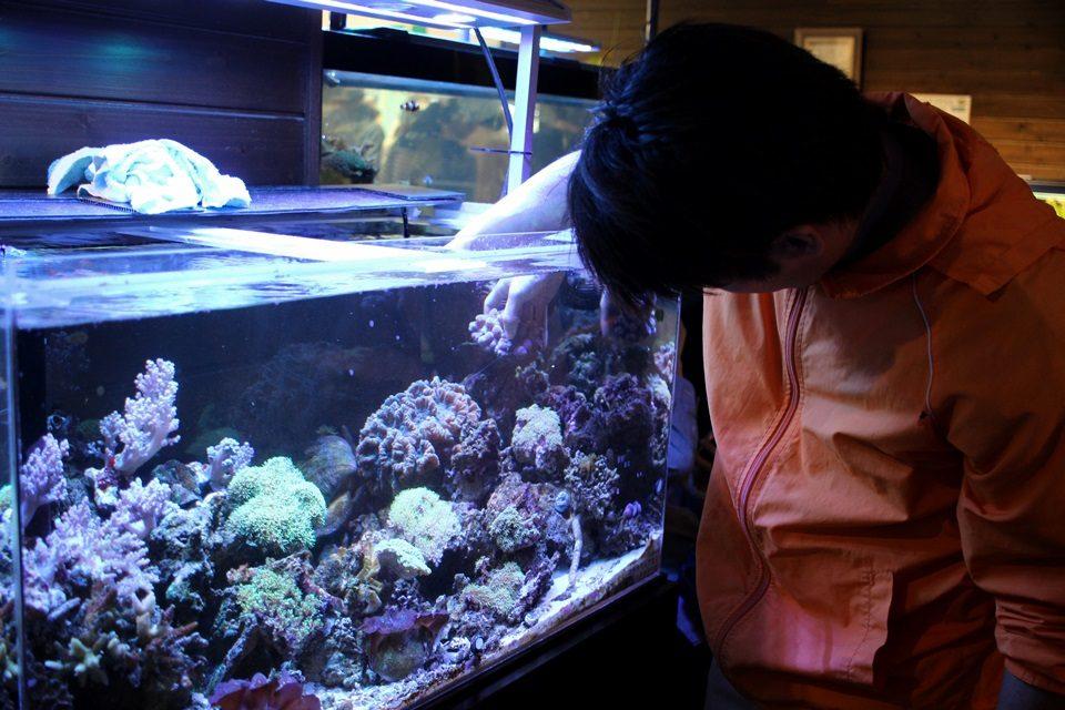 竹島水族館 生体サンゴ水槽(4/23)