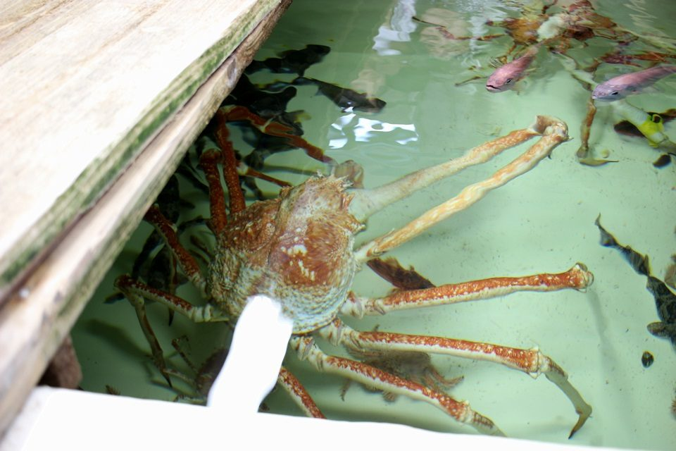 竹島水族館 バックヤードにも待機