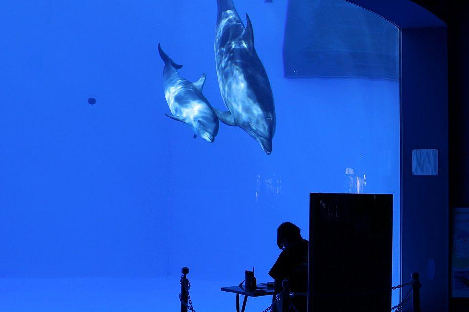 名古屋港水族館 ココとソラ