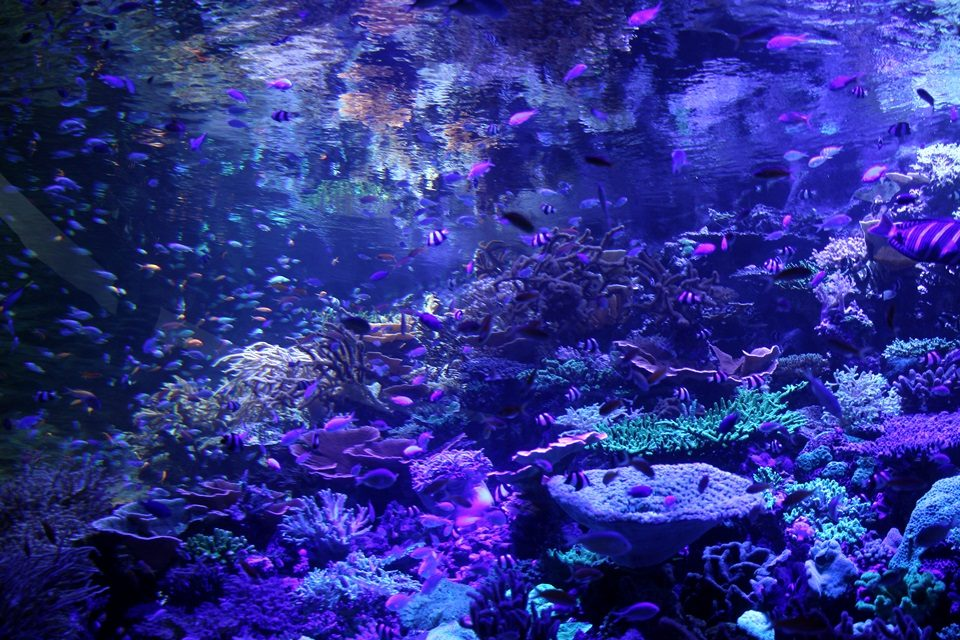 名古屋港水族館 南館2F生体サンゴ水槽