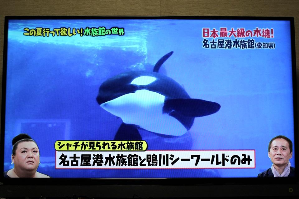 マツコの知らない世界 名古屋港水族館