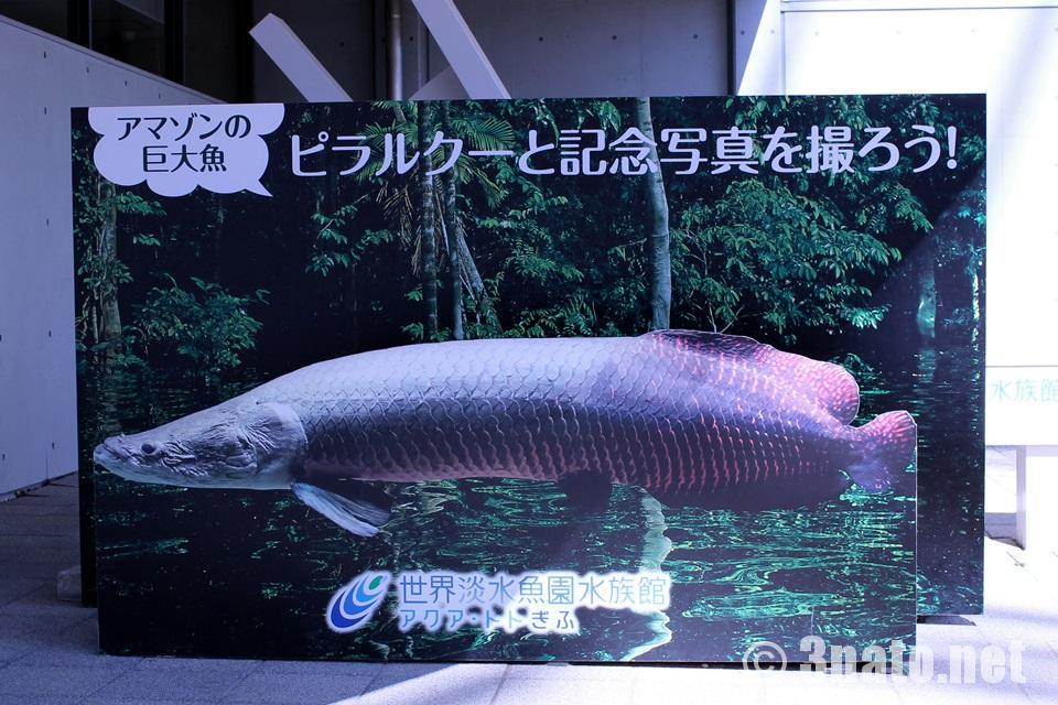 世界淡水魚水族館アクア・トトぎふ