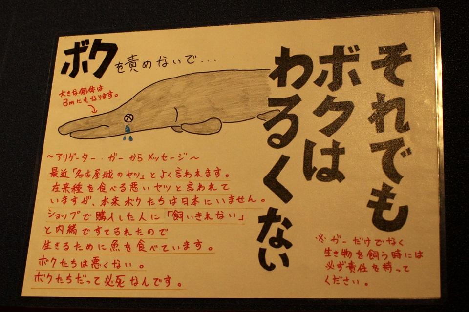 竹島水族館 アリゲーターガー