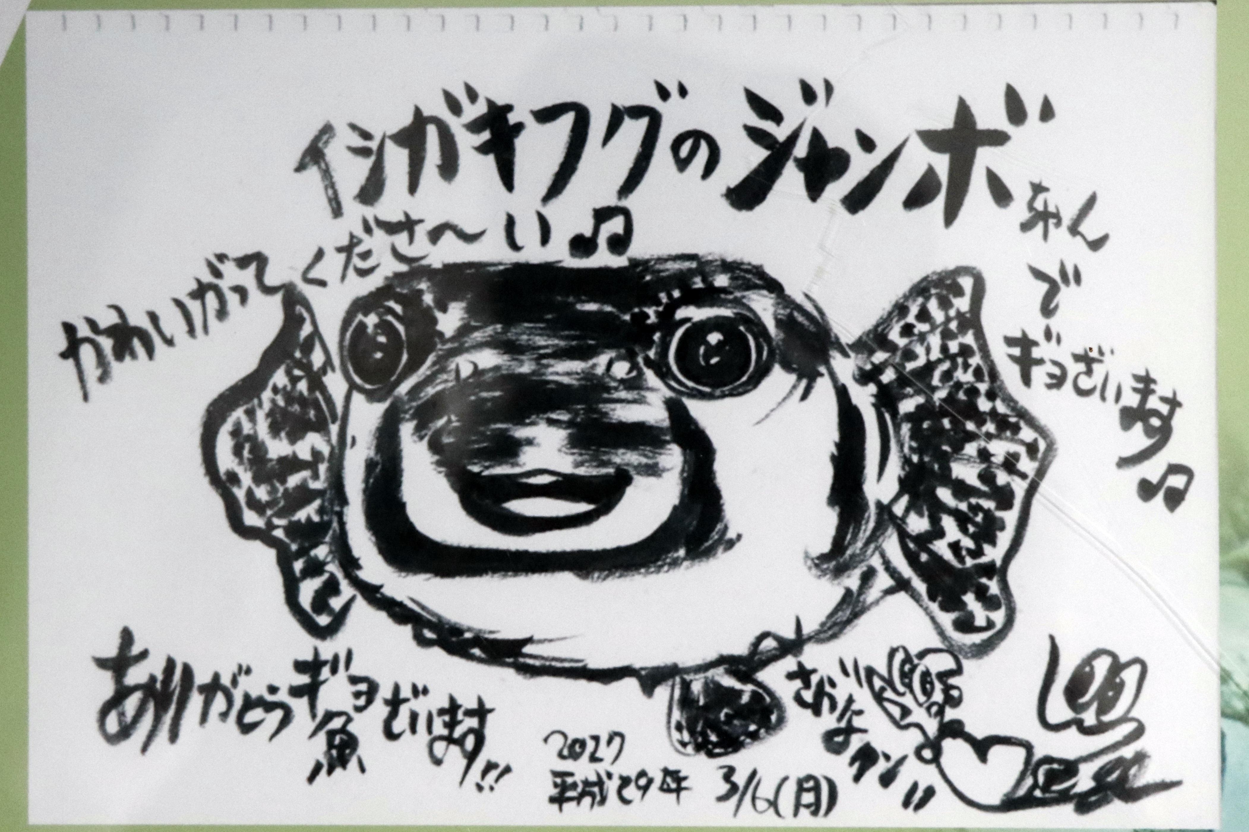さかなクンによるイシガキフグのイラスト紹介