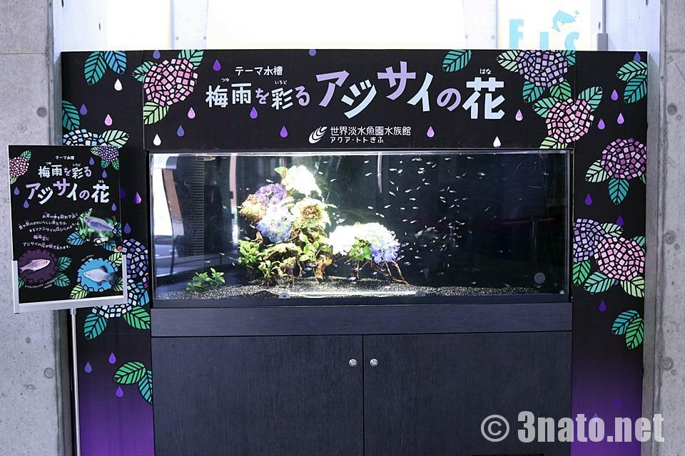 アクア・トトぎふ 入口を飾るテーマ水槽