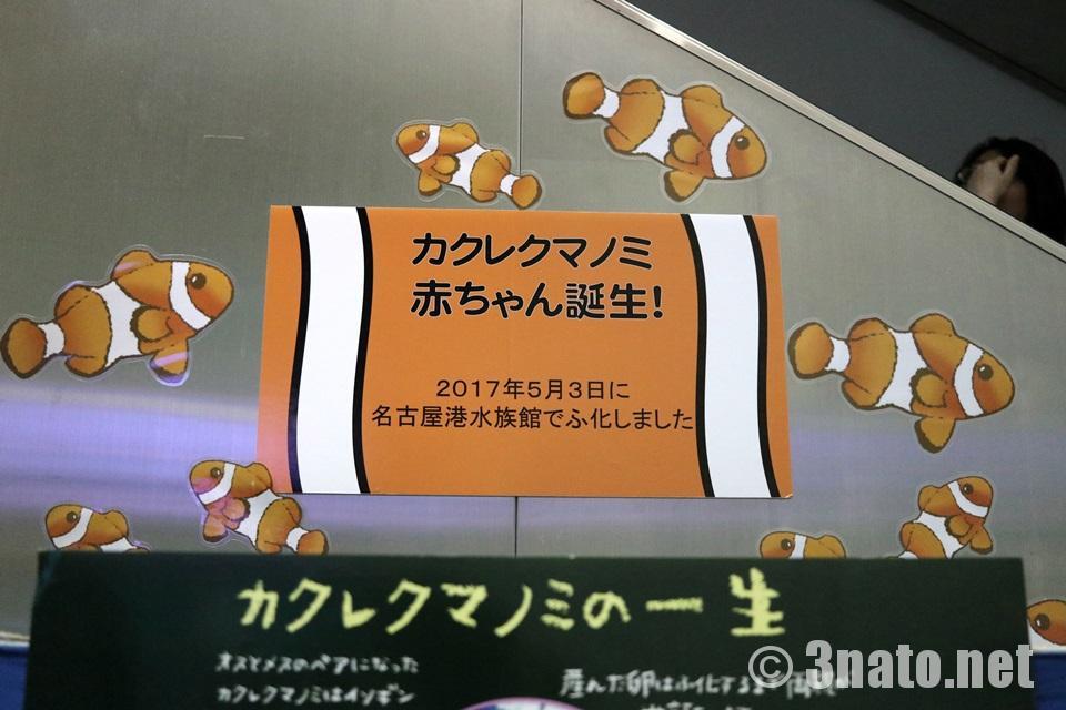 カクレクマノミの赤ちゃん誕生!(名古屋港水族館)