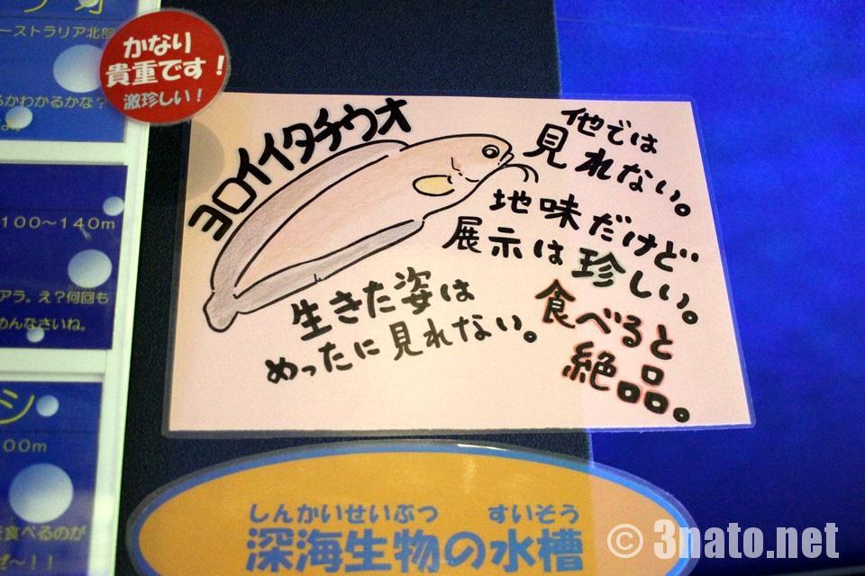 竹島水族館のヨロイイタチウオ紹介