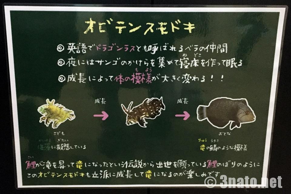 名古屋港水族館 こどもの日特別展示