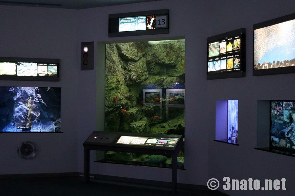光の吸収と魚の色(名古屋港水族館)