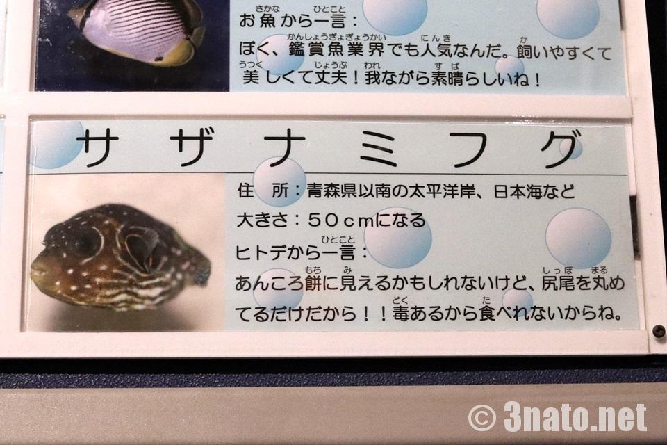 竹島水族館のサザナミフグ