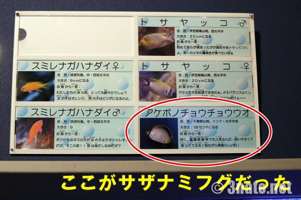 新しい魚名パネル