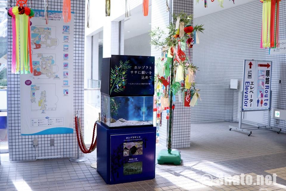 七夕特別展示水槽「星空にちなんだ生き物たち」(名古屋港水族館)