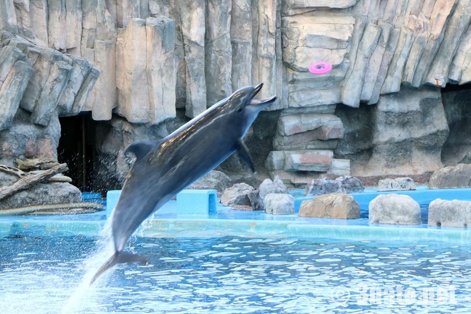 イルカパフォーマンスショー(名古屋港水族館)