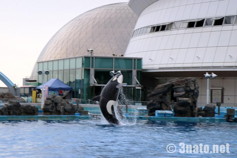 リンのジャンプ(名古屋港水族館)