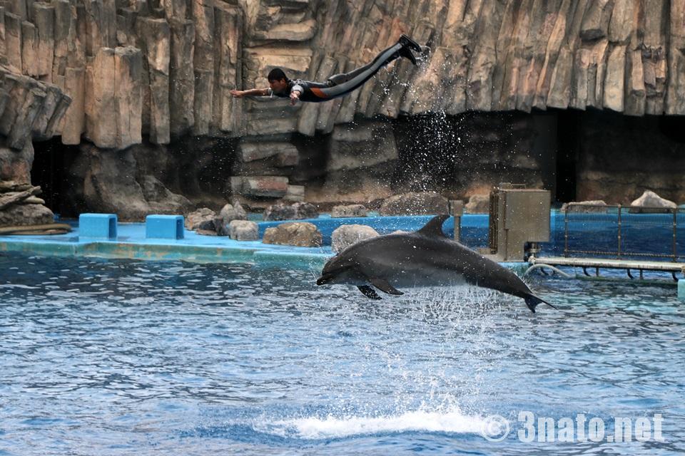名古屋港水族館のイルカパフォーマンスショー
