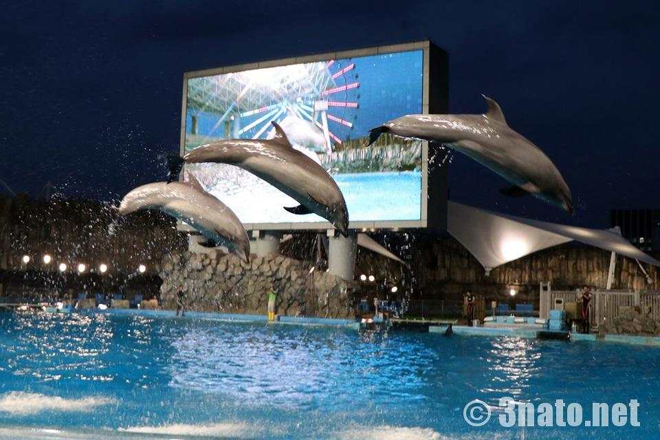 イルカたちのナイトパフォーマンスショー(名古屋港水族館)