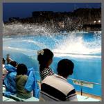 イルカシャワー(名古屋港水族館)