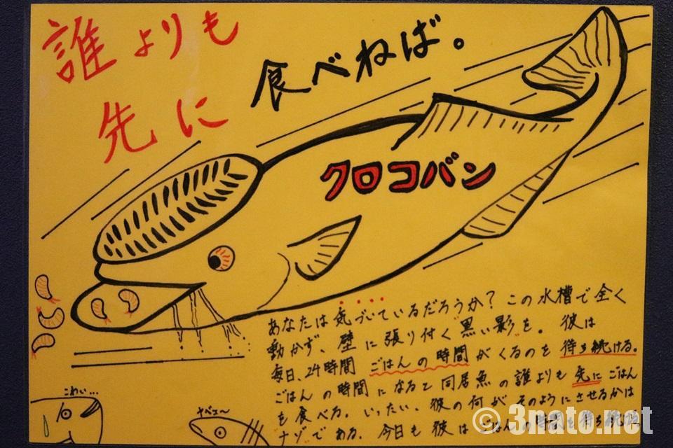 クロコバン(竹島水族館) 撮影日:2017/07/26