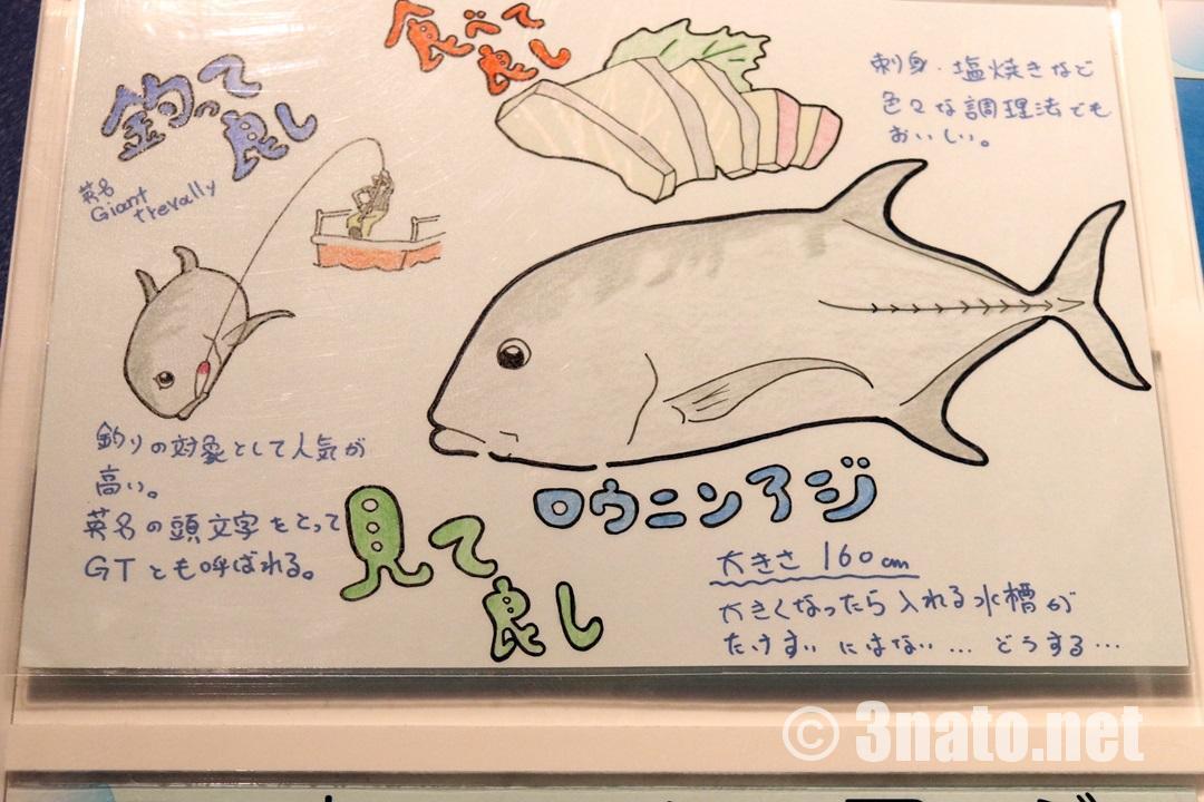 ロウニンアジの解説版 (竹島水族館) 撮影日:2018/04/08