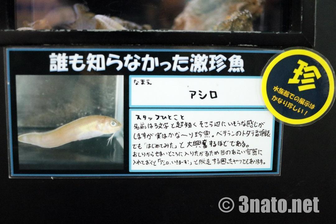 アシロの解説版 (竹島水族館) 撮影日:2018/04/08