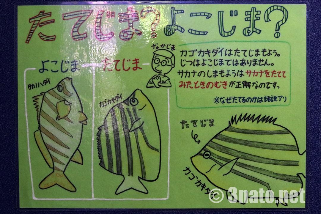 縦縞、横縞についての解説(竹島水族館)撮影日:2018/05/18