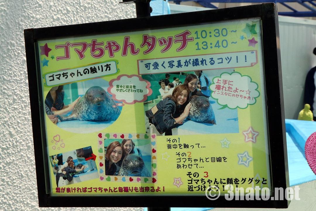 ゴマちゃんタッチ(伊勢シーパラダイス)撮影日:2018/05/27