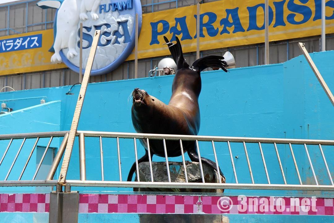 伊勢シーパラダイス入り口横プール 撮影日:2018/05/27