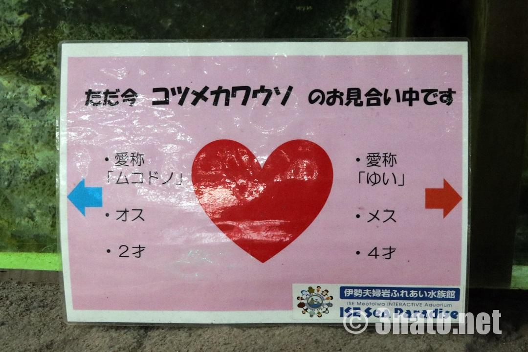 コツメカワウソお見合い中(伊勢シーパラダイス)撮影日:2018/05/27