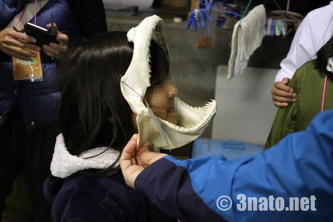 サメの歯と比べてみる(碧南海浜水族館)