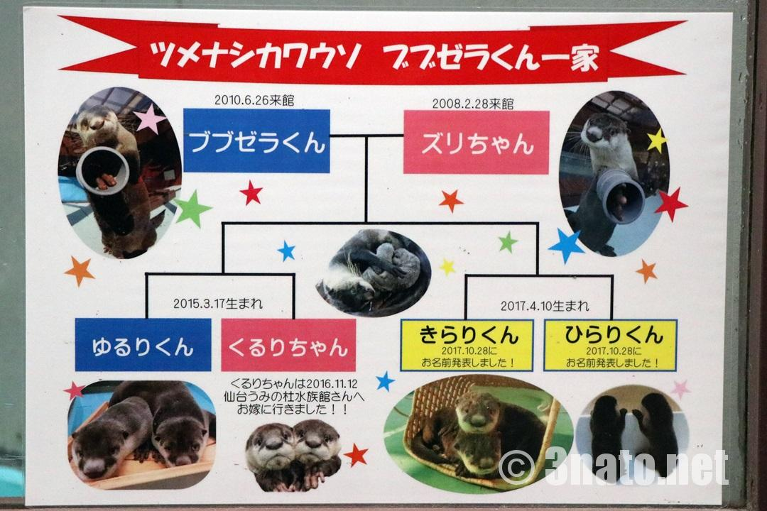 ブブゼラ一家の家系図(伊勢シーパラダイス)撮影日:2018/05/27