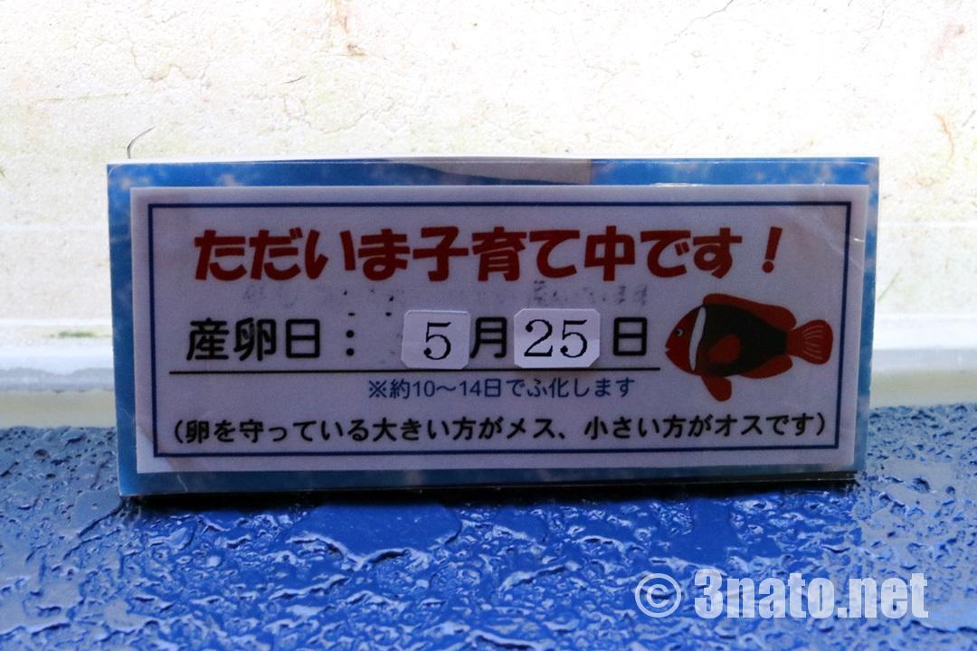 ただいま子育て中(碧南海浜水族館)撮影日:2018/06/01