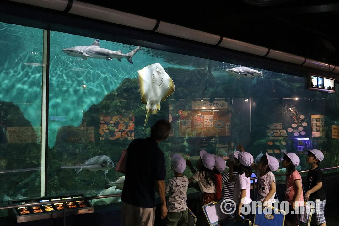 サメやエイが悠々泳ぐ大水槽(碧南海浜水族館)撮影日:2018/06/01