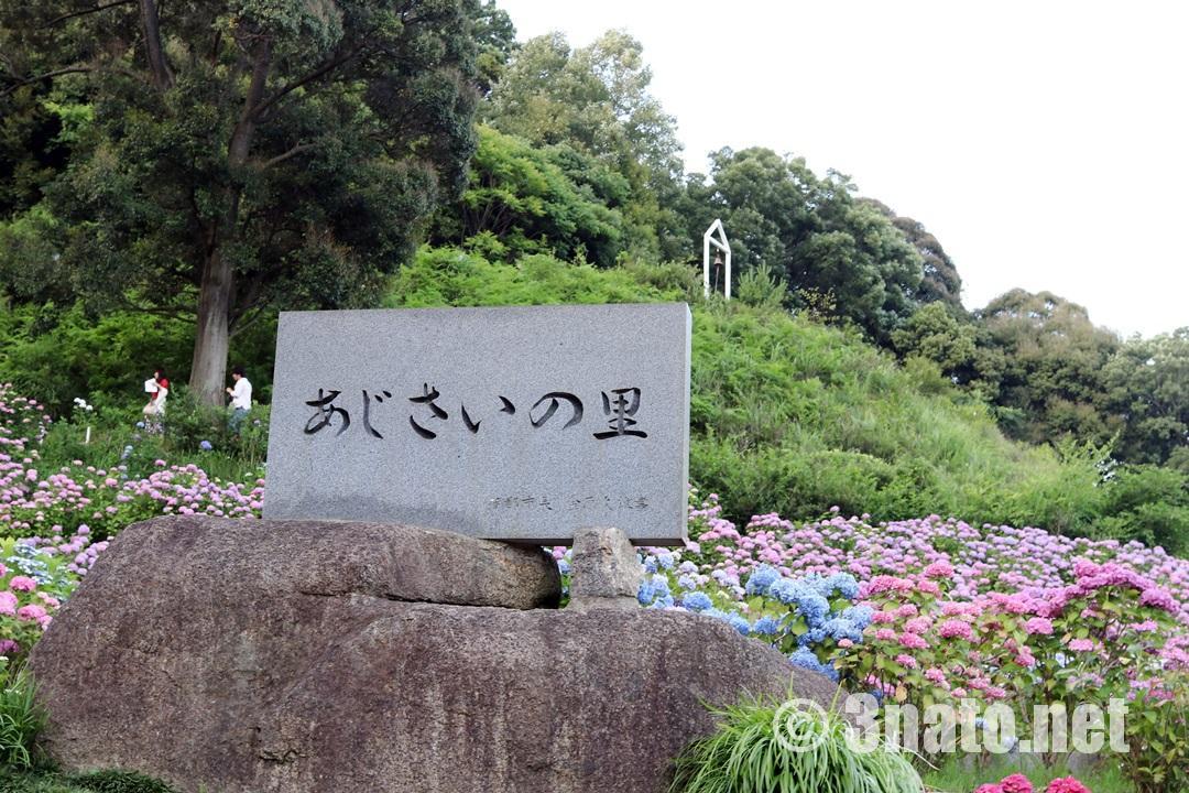あじさいの里(形原温泉)撮影日:2018/06/09