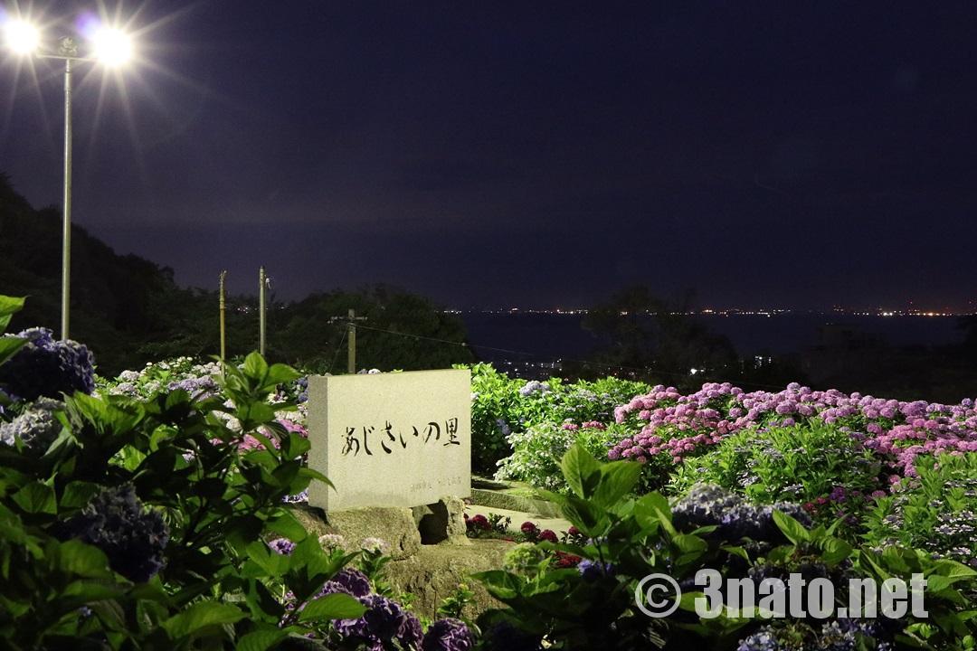 夜間ライトアップのあじさいの里(形原温泉)撮影日:2018/06/14