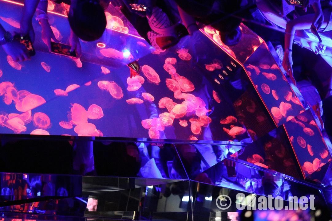 まるで万華鏡(名古屋港水族館くらげなごりうむ)撮影日:2018/11/08