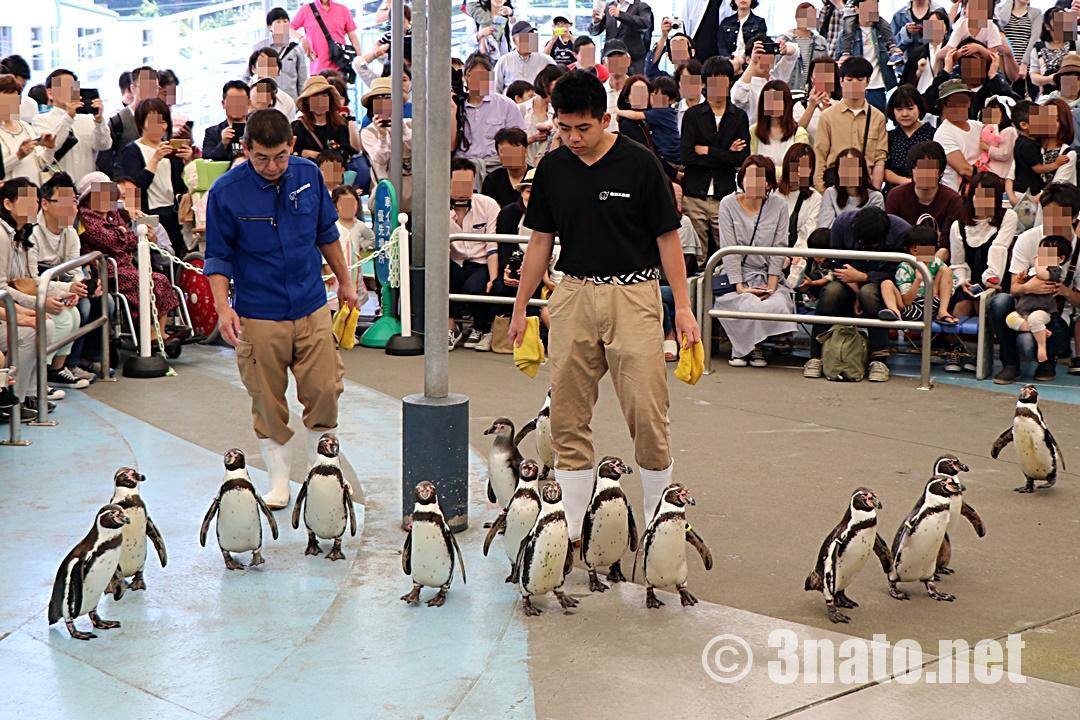 フンボルトペンギン(鳥羽水族館)撮影日:2018/05/06