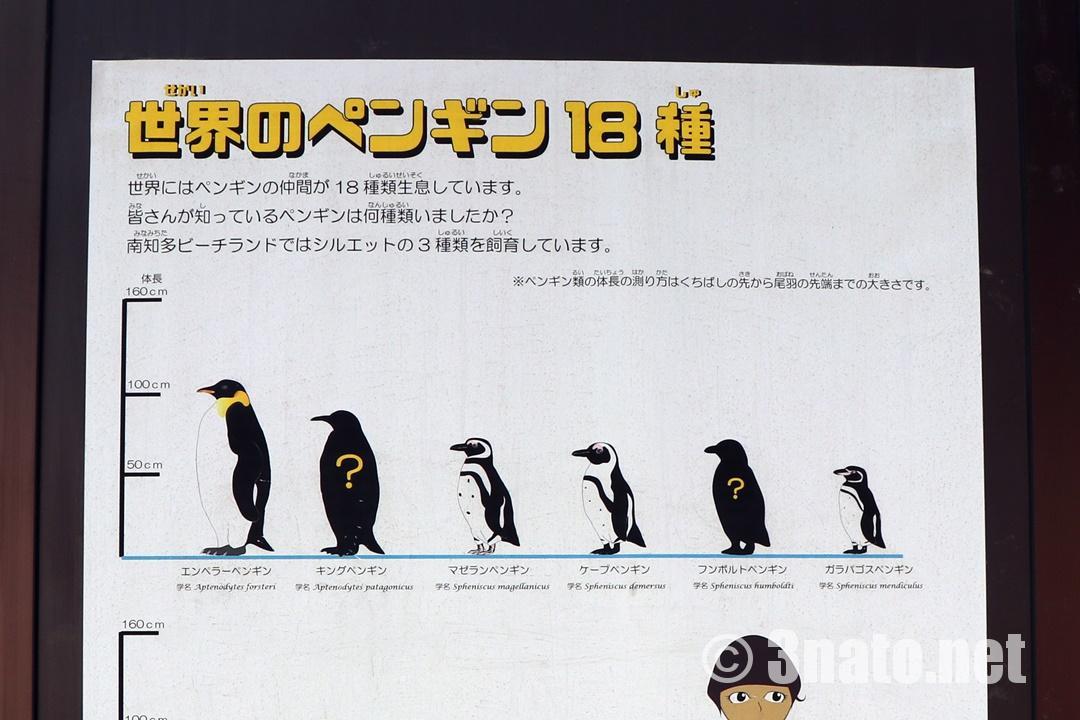 ペンギン解説(南知多ビーチランド)撮影日:2018/07/08