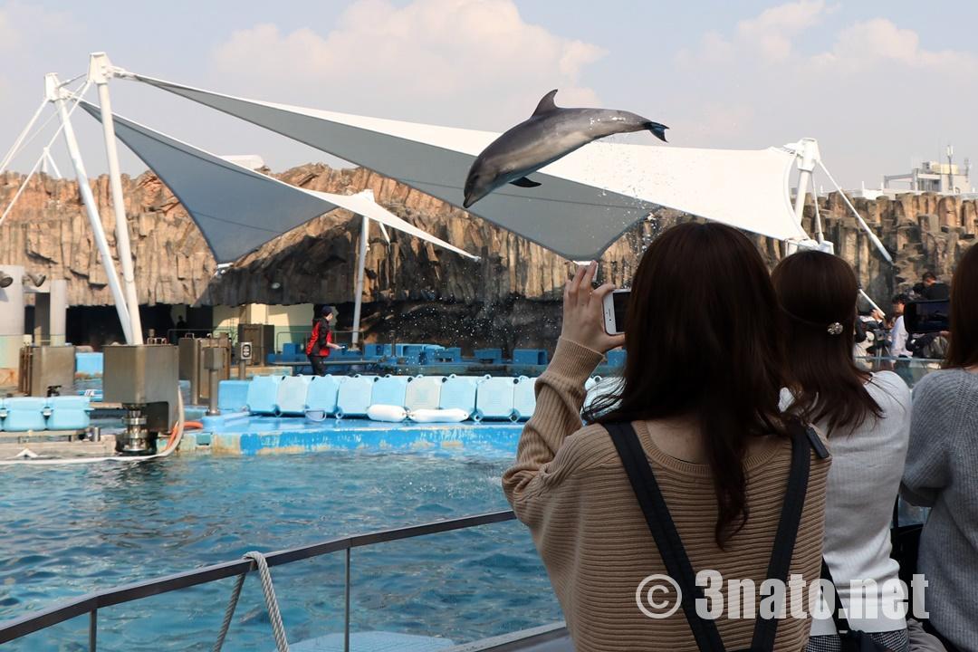 バンドウイルカのジャンプ(名古屋港水族館)撮影日:2018/11/08