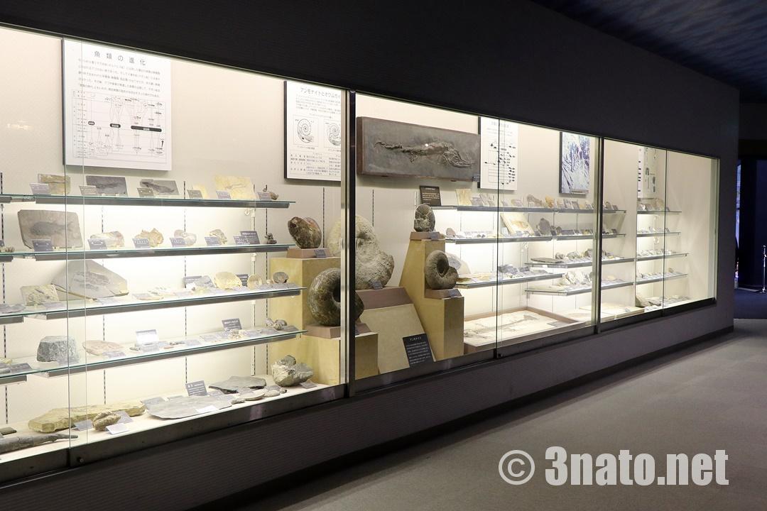 古代館での化石展示(志摩マリンランド)撮影日:2018/11/30