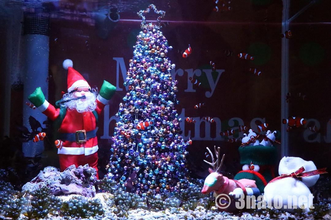 カクレクマノミとサンタのクリスマス水槽(名古屋港水族館)撮影日:2018/12/01